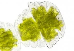 Neben dem bioziden Filmschutz kann heutzutage auch mehr und mehr ein natürlicher Schutz vor Algen und Pilzen realisiert werden