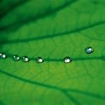 StoLotusan: Die Fassadenfarbe mit Lotus-Effekt